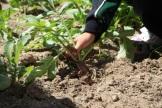 jardin de niños seph (3)